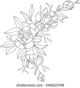 sketch of peonies for tattoo