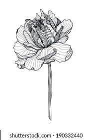 Sketch of peony flower in black and white