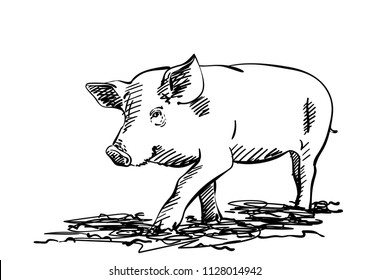 Sketch of pig, Hand drawn vector illustration with hatched shades