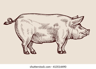 Sketch pig. Hand drawn vector illustration