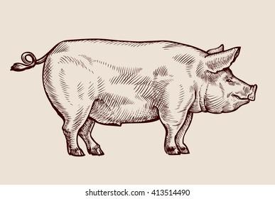 Sketch pig. Hand drawn vector illustration