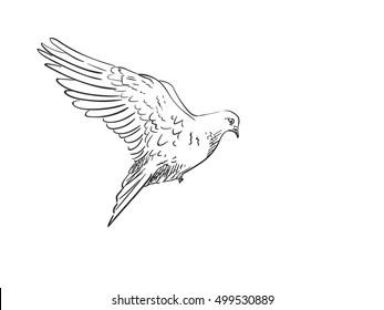 Dove Sketch Images, Stock Photos & Vectors   Shutterstock