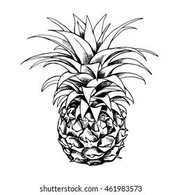 Sketch of a pineapple fruit. Vector black and white illustration.