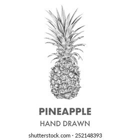 Sketch of pineapple. Hand drawn vector illustration. Fruit collection.