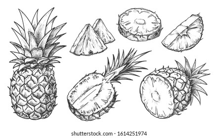 Ananas-Skizze. Einzeln handgezeichnete Ananas-Scheiben. Zitrusfrüchte, die in halben oder tropischen Scheiben geschnitten werden. Vegetarische und Vitamin-Lebensmittel, süße Wüste Vektorillustration Zeichnung. Natur und ökologische, gesunde Ernährung