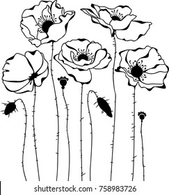 Sketch of poppies silhouette isolated on white background