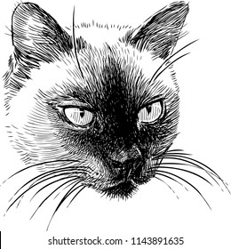 Sketch portrait of a siamese cat