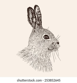 Sketch rabbit. Hand drawn the hare. Realistic vector illustration.