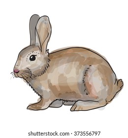 sketch rabbit.  watercolor style. Isolated on white