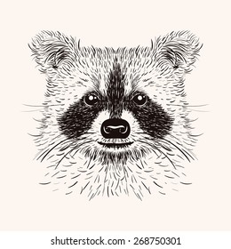 Sketch raccoon face. Hand drawn vector  illustration in doodle style. Engraving design for tattoos or print.
