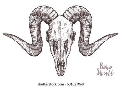 Sketch Of Ram Skull. Boho And Hipster Hand Drawn Illustration. Anatomical Sheep Head