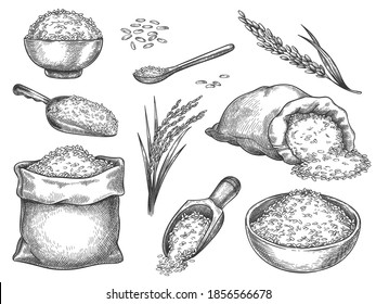 Sketch rice grains. Vintage seeds pile and farm ears. Whole basmati grain in bag, scoop and spoon. Rice porridge bowl. Hand drawn vector set. Illustration healthy ingredient, meal nutrition drawing
