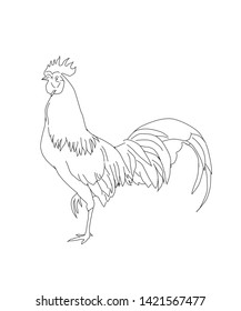 sketch the rooster's white background vector