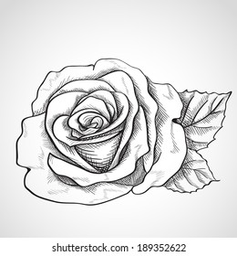 Sketch rose, hand drawn, ink style