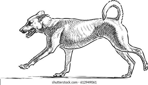 sketch of a running dog