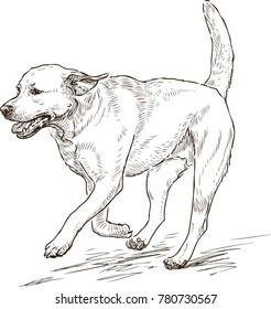 sketch of a running retriever