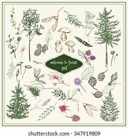 Sketch set of forest floral elements