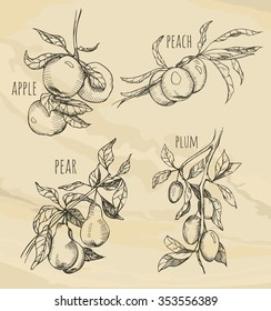 Sketch set of fruits growing on the branches. Hand drawn sketch fruit set. Eco foods