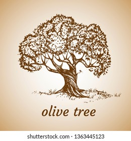 Sketch set of olive trees. Hand drawn vector illustration. Retro style.