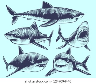 Sketch shark. Swimming sharks with open mouth. Underwater animal vector tattoo collection