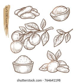 Sketch of shea elements. Vector set of branches, leaves, nuts and butter silhouettes. Realistic icons of organic plant are good for a logo, banner, card creation or advertising of cosmetics.