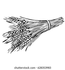Sketch sheaf of wheat. Hand drawn Wheat ears cereals crop