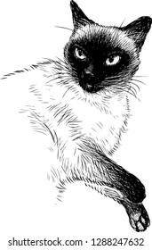 A sketch of a siamese cat