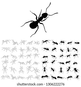 sketch and silhouette of an ant crawling, set