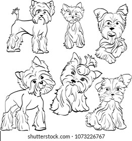 Sketch small dogs Yorkshire Terrier breed. Linear drawing of Pets. Dogs are cute and with different moods and hairstyles
