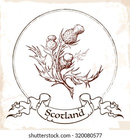 Sketch style Caledonian thistle in a Celtic decorative border. Traditional symbol of Scotland. Eps10 vector illustration.
