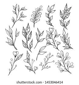 Sketch Style of Floral Ornament With Branches and Leaves on White Background. Decorative Elements for Decoration