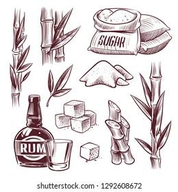 Sketch sugar cane. Sugarcane sweet leaf, sugar plant stalks, rum drink glass and bottle. Sugar manufacturing hand drawn vector set