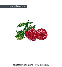 sketch sweet raspberries: two large berries and small
