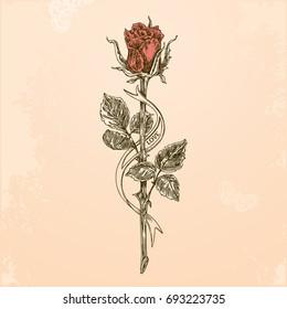 Rose Tattoo Stock Vectors Images Vector Art Shutterstock