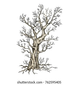 A sketch of the tree on a white background. Drawing illustration. Detached vector tree without leaves