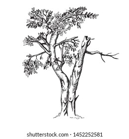 Sketch tree in toile de jouy style. Vector illustration