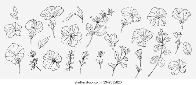 Sketch tropical flowers and leaves. Vector illustration