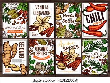 Sketch vector design templates with herbs and spices, hand drawn illustration of ginger, rosemary, mint, vanilla, cinnamon, chili pepper. Set of colorful cards and posters with botanical elements