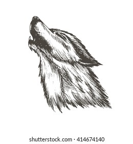 sketch vector illustration of wolf isolated white background. Silhouette of the head of the wild animal howling in retro style