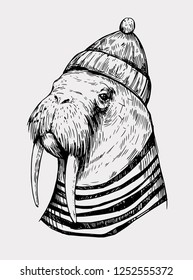 Sketch of a walrus in a cap and sailor shirt. Hand drawn illustration converted to vector
