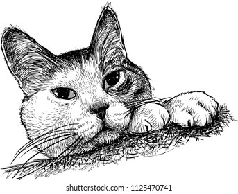 Sketch of a watching domestic cat