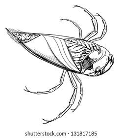 sketch of a water beetle