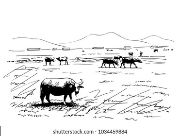 Sketch of water buffaloes grazing in farm field, Hand drawn vector illustration
