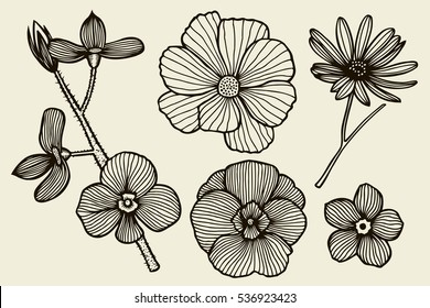 Sketch of wild flowers, hand drawn isolated on a beige background.