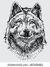 sketch of the wolf head