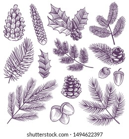 Sketch xmas branch set. Retro christmas holly and evergreen drawing spruce pine fir leaves with winter pine cones vector pinecones leaf and rustic botanical vintage plants elements