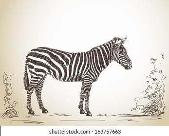 Zebra Sketch Images Stock Photos Vectors Shutterstock