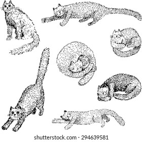 Sketched cats. Hand-drawn illustration.