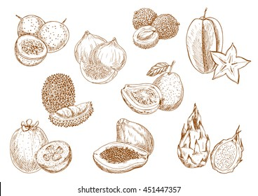 Sketched exotic lychee, carambola and durian, fragrant papaya, guava and passion fruit, sweet fig, feijoa and dragon fruits symbols. Kitchen accessories or interior design
