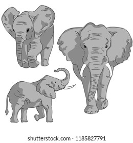 Sketches of elephant on white background. Set of in color elephants.